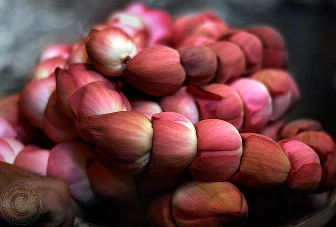 lotus garland