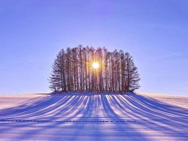 alberi sole